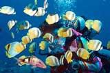 Friendly Fiji Fish