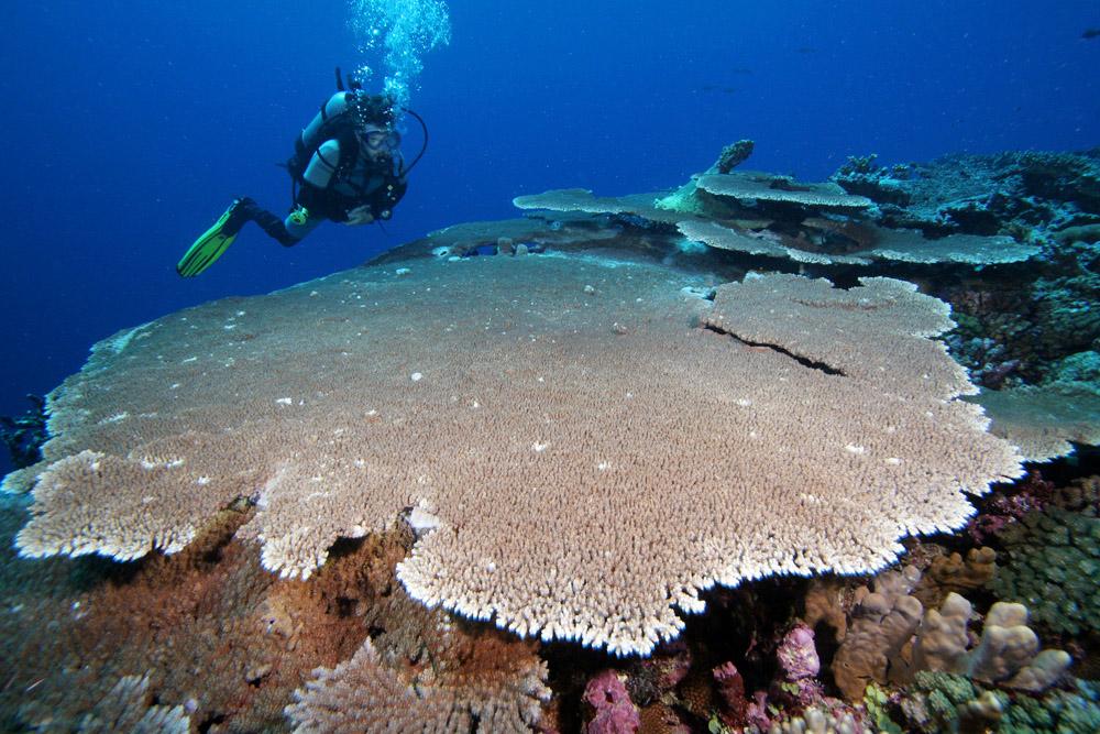 Prestine Coralsin Kadavu