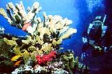 Raki Corals