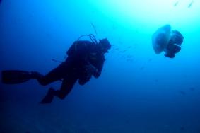 North of Sydney Dive Sites