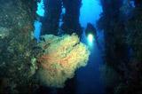 Diving Dumaguete
